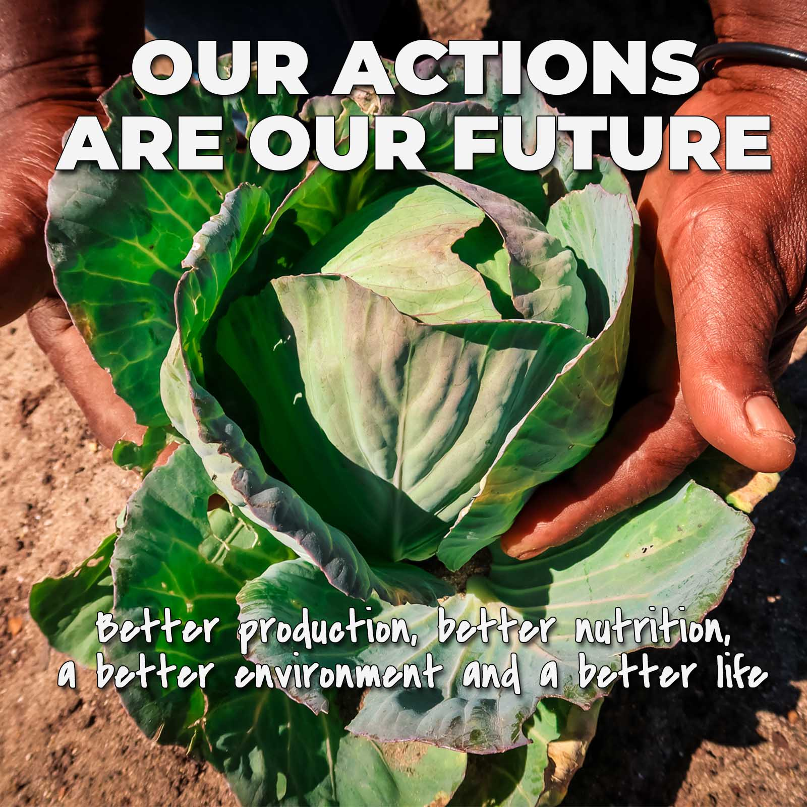 A pair of farmers hands holding a freshly grown lettuce on top of soil in cape town to develop our sustainable farming charities