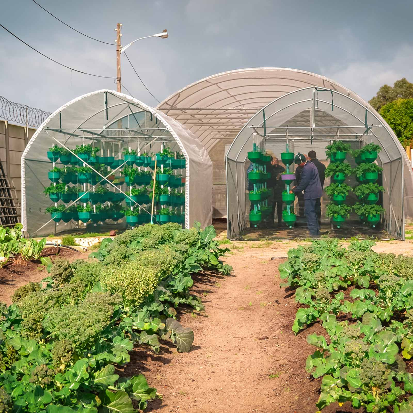 an urban farm outside of cape town with rows of green vegetables that need sustainable living charities to help them get grow better with new soil
