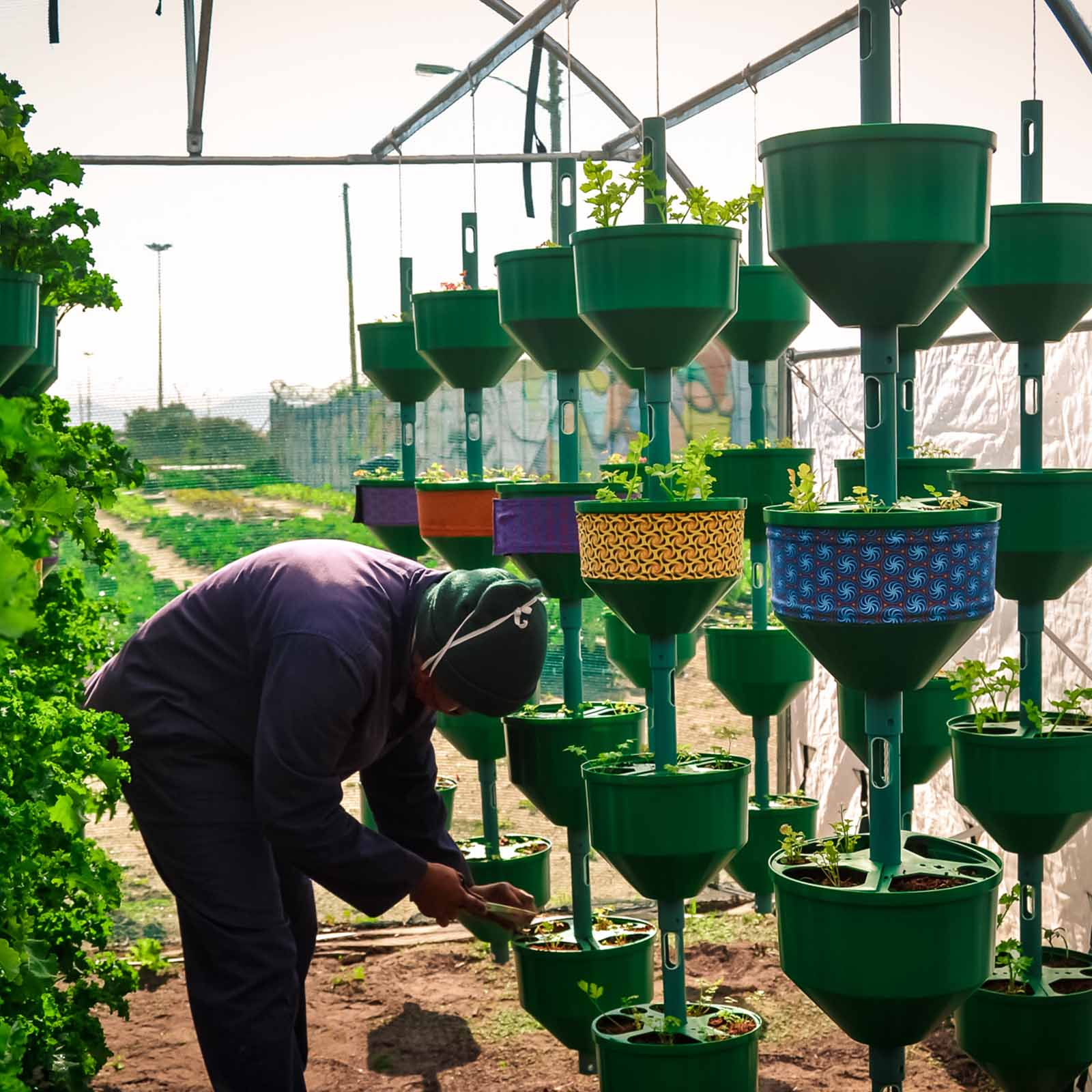 an urban farmer tending to hanging herb gardens in cape town who will help develop urban vegetable farming in the city
